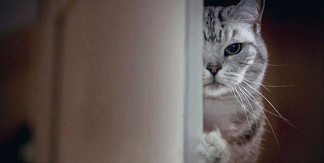स्मगलर  मांजरी