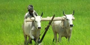 शेतकर्यांचे धोरण ओळखा