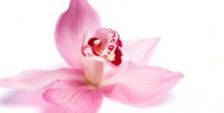 फुलांच्या अर्कापासून बनविली औषध पध्दती