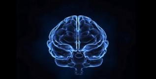 न्यूरोबायालॉजी