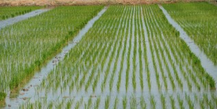 शेतीसाठी स्वतंत्र अर्थसंकल्पाचा प्रस्ताव