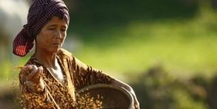 महिलांचे बीज स्वावलंबन अभियान
