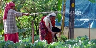सेंद्रीय शेती हीच आधुनिक शेती