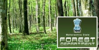 महाराष्ट्र वन विकास महामंडळात १८५ पदे