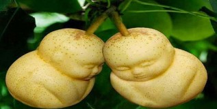 मनपसंत आकारातील फळे भाज्या आता शक्य