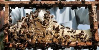 मधमाशा पालनाचा व्यवसाय