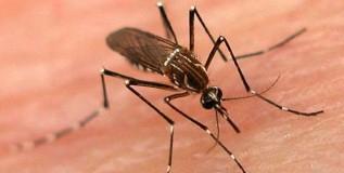 डेंग्यूसदृश आजाराने चार मुले दगावली