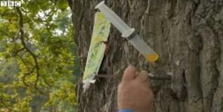 मरणासन्न झाडांना लसणामुळे मिळेल संजीवनी
