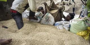 सोयाबीनचे पीक वाळल्याने शेतकरी हवालदिल
