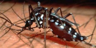 बालकांचा डेंग्यूपासून बचाव करा