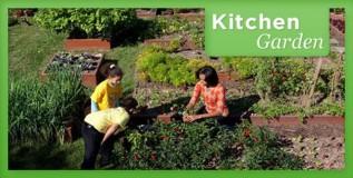 किचन गार्डन व्यवस्थापन