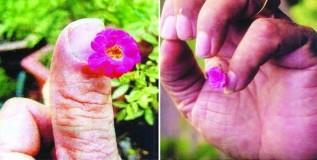 सर्वात छोटा गुलाब गोल्डन बुक मध्ये नोंदला