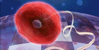 हानिकारक जिवाणूंवर नियंत्रण मिळविणा-या प्रतिजैविकांचा शोध