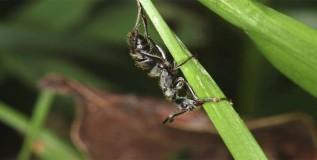 मुंग्याही करतात टॉयलेटचा वापर