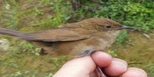 चीनमध्ये सापडला नवा पक्षी