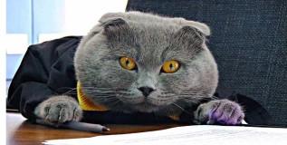 बॉसी मांजर- कम्युनिकेशन मॅनेजर