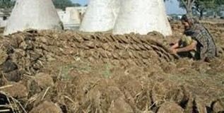 देश-विदेशात सोलापुरातून होणार गोवर्यांची निर्यात