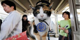 स्टेशनमास्तर मांजरीचे निधन