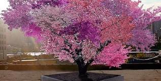 तब्बल ४० प्रकारची फळे लागतात एकच झाडाला