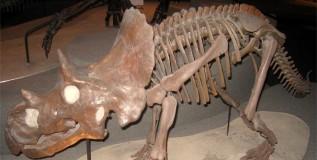 डायनासॉरच्या नव्या प्रजातीचे अवशेष सापडले