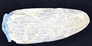 २०० वर्ष जुन्या कंडोमची ४६ हजारांना विक्री