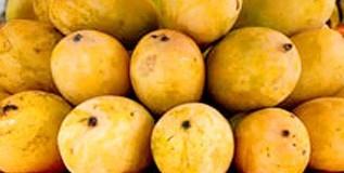 कॅन्सरचा धोका आंबे खाल्ल्याने टळणार?