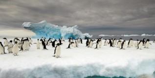 दीड लाख पेंग्विन महाकाय हिमकडा कोसळून मृत्युमुखी