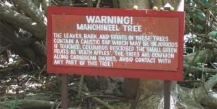 तुम्हाला माहीत आहे का जगातील सर्वात धोकादायक आणि विषारी झाड