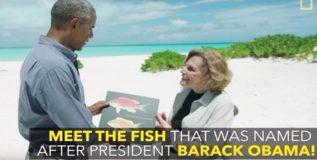 वैज्ञानिकांनी माशाला दिले 'बराक ओबामा' असे केले नामकरण