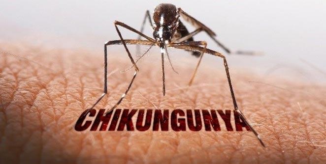 chikunguniya