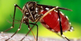 १४ देशांची डेंग्यूवरील लशीला मान्यता