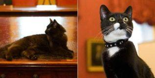 इंग्लंडच्या मंत्रालयात उंदिर पकडण्यासाठी दोन नव्या मांजरांची भरती