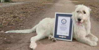 गिनीज बुकात पोहचला ३ फूटांची शेपटी असलेला कुत्रा