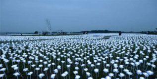 चीनमधील चमकत्या गुलाबांची बाग