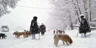 हिमस्खलनात अडकलेले ५ जवान सुरक्षित
