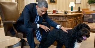 ओबामाच्या कुत्र्याने घेतला हाईट हाऊसमधील पाहुण्याचा चावा
