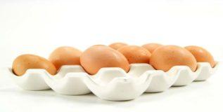 अंडी चोरल्यामुळे शोकग्रस्त बदकांचा अन्नत्याग