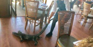ऑस्ट्रेलियातील हॉटेलमध्ये भल्यामोठ्या पालीचा शिरकाव