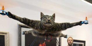 मेलेल्या पाळीव मांजरीला त्याने बनविले ड्रोन