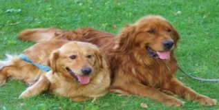 मुंबईतील दोन कुत्री ५ कोटींच्या मालमत्तेची वारसदार