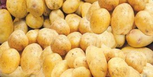 हवेत तयार होत आहे बटाट्याचे सुधारित बियाणे