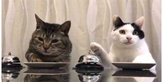 मांजरांवरून ब्रिटन, रशियात जुंपली