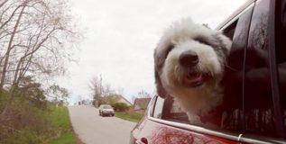 दहा लाख डॉलरचा मालक झाला कुत्रा