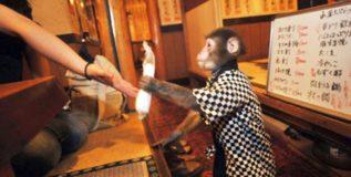 'या' रेस्टॉरंटमध्ये माकड आहे वेटर