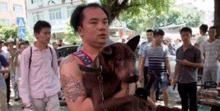 चीनमध्ये कुत्र्याच्या मांसाची जत्रा सुरू