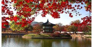 दक्षिण कोरिया- एक अजबगजब देश