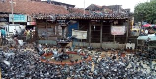 दादरचा कबुतरखाना बंद करण्याची पालिकेककडे मनसेची मागणी