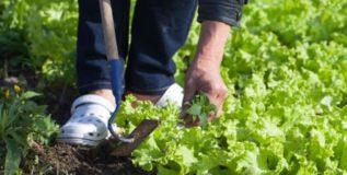 लठ्ठपणावर बागकामाचा उपाय