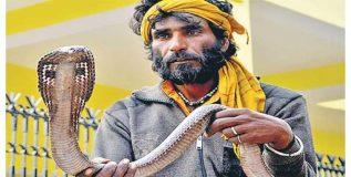 या समाजात वरदक्षिणा म्हणून देतात २५ विषारी साप