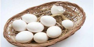 अंडी शाकाहारी की मांसाहारी?
